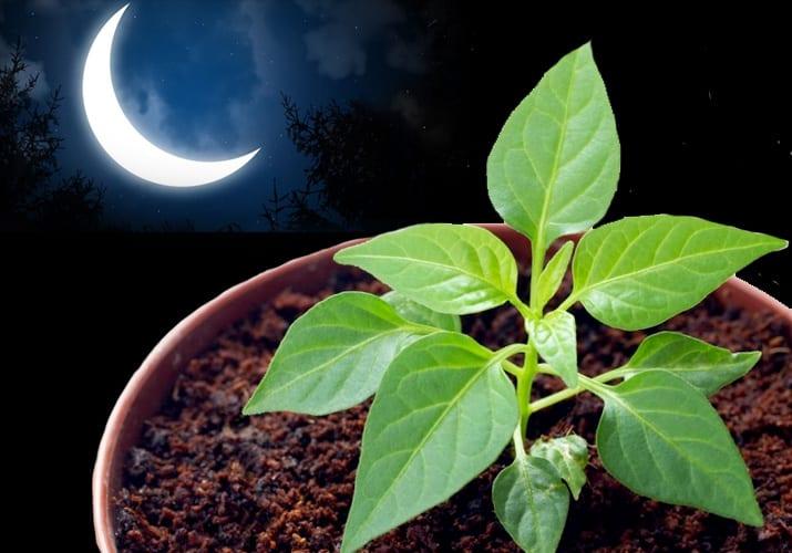есть зависимость между фазами луны и растениями