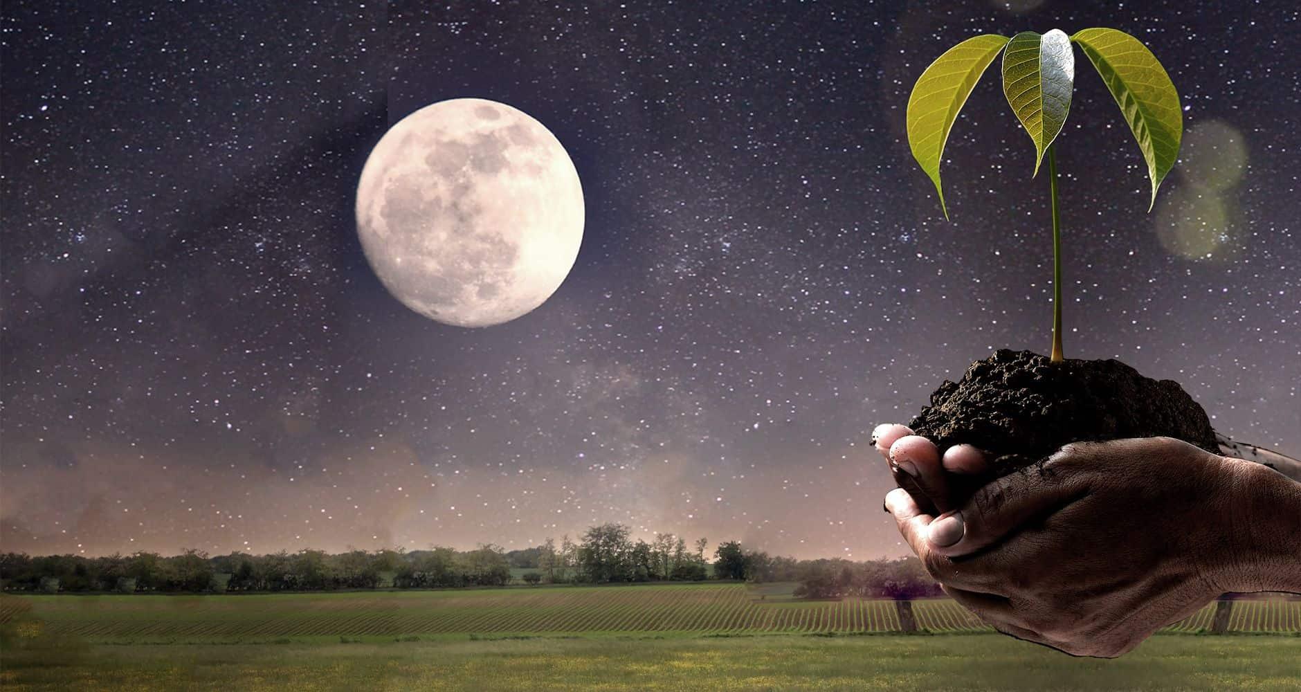 работы в саду и огороде подстраивают под фазы луны
