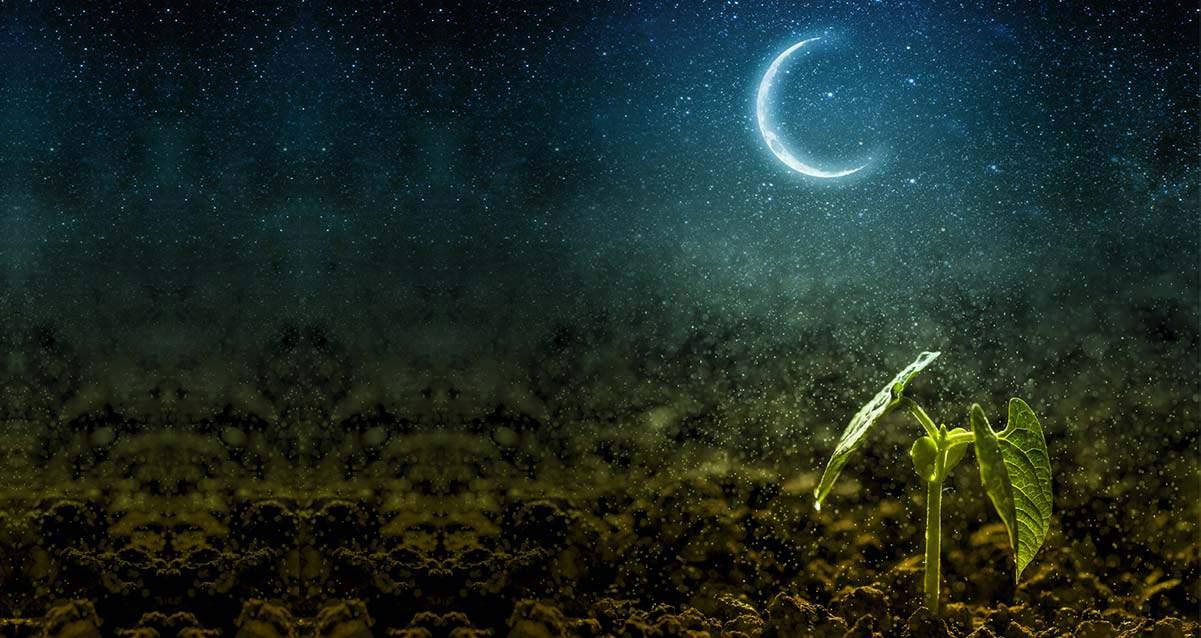 луна растёт - можно начинать работы в саду и огороде