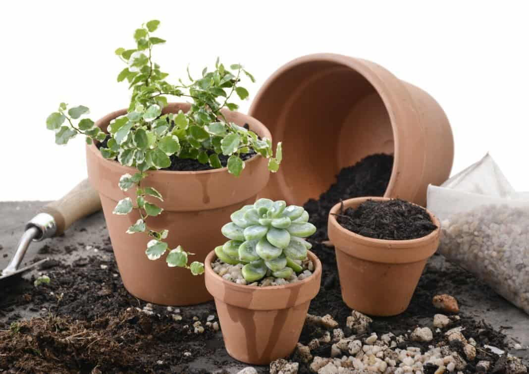 дайте сегодня растениям отдохнуть