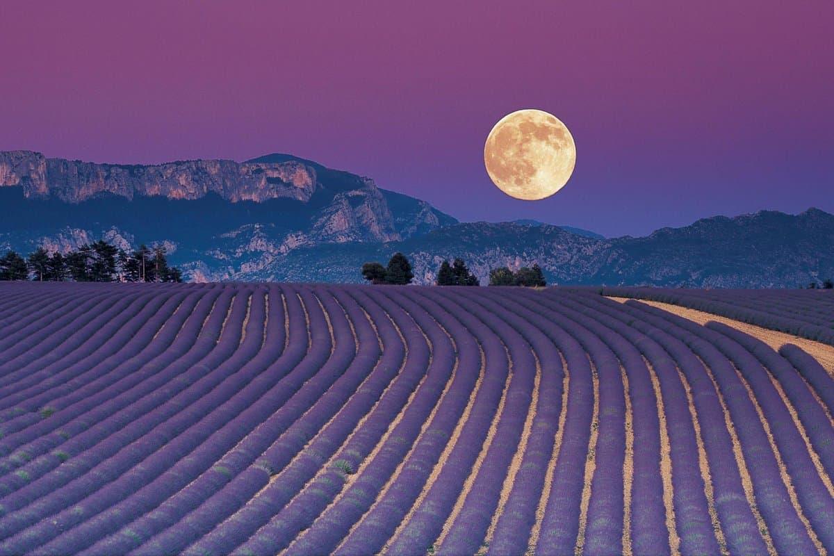 луна влияет на растительный мир и это доказано научно