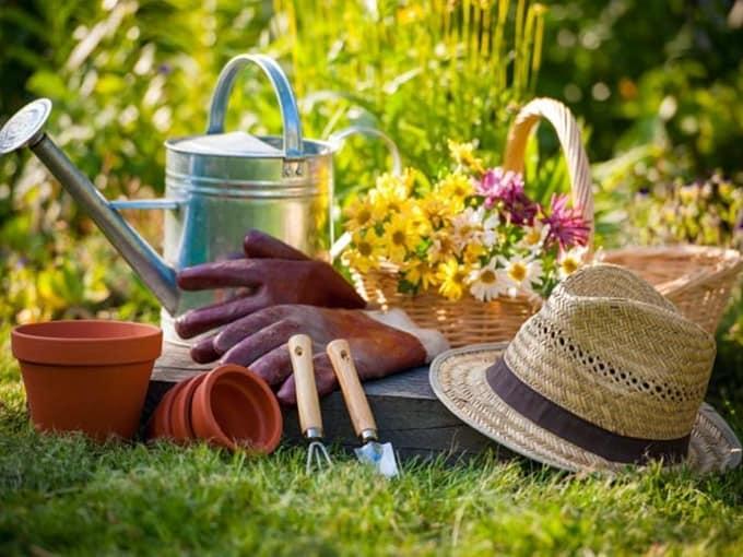 стоит учесть фазу Луны при работах в саду и огороде