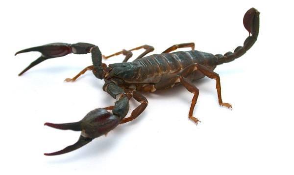 марс в скорпионе