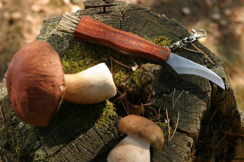 сбор грибов тоже запрещён