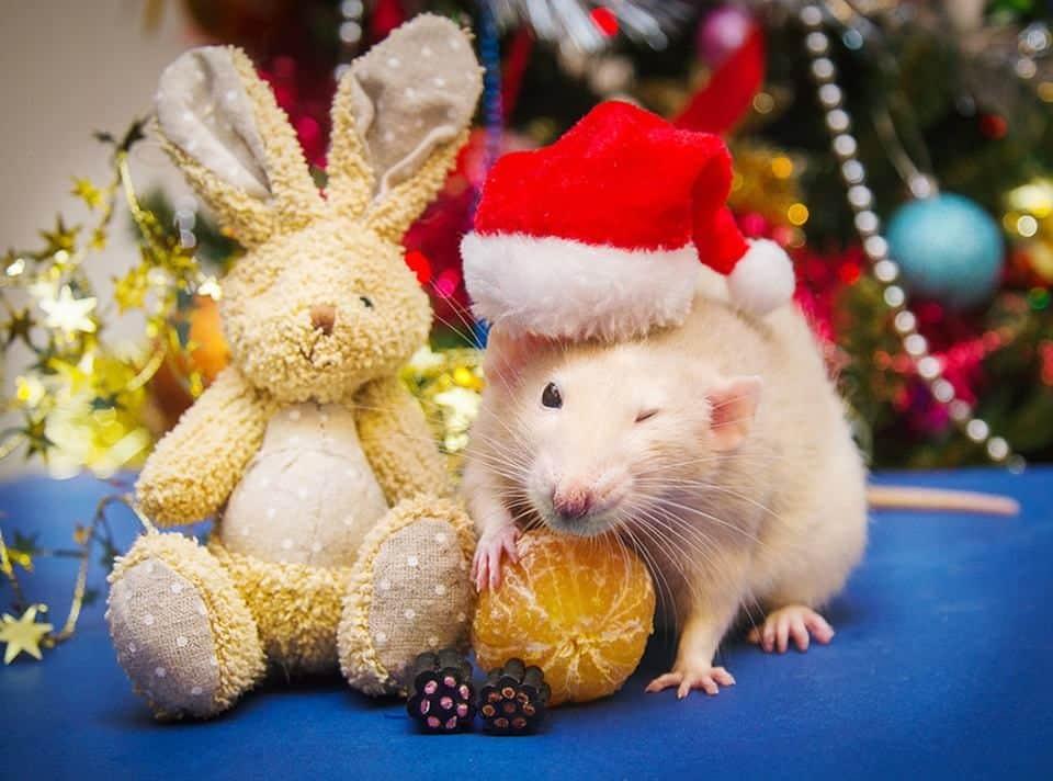 новогодние обои на рабочий стол год мыши непонятные