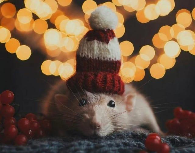 новогодняя мышка фото
