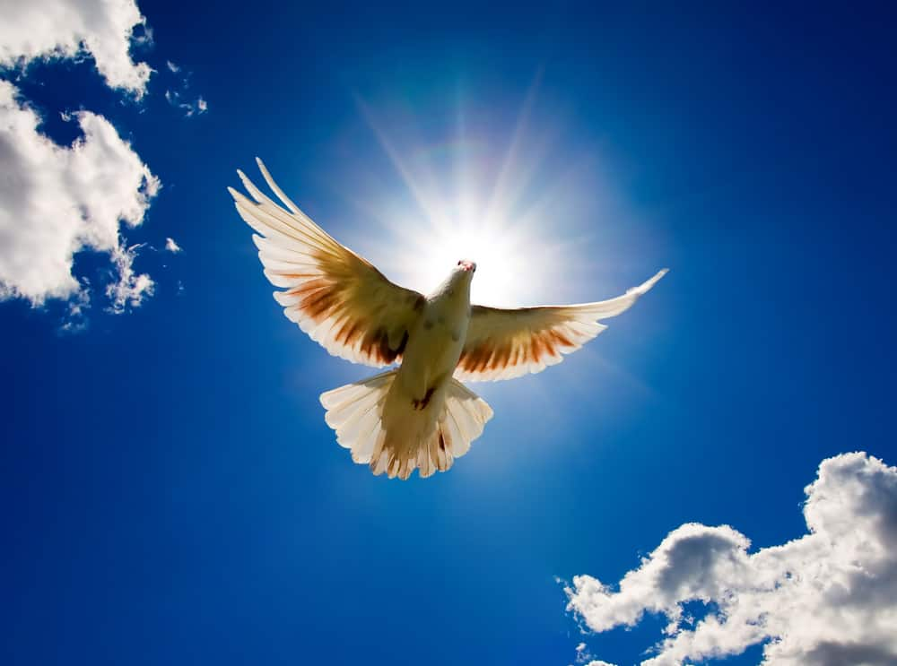 духовность очень важна для натива