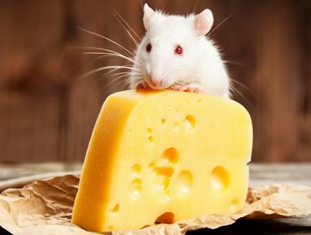 Что готовить на новый год Крысы