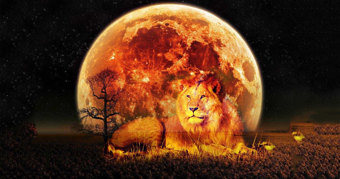 Солнце в Льве