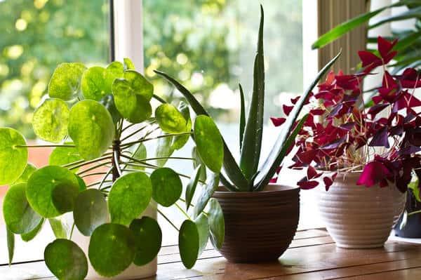 цветочные вазоны на окне