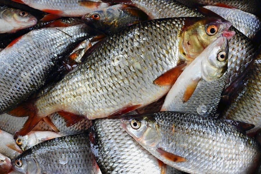 заговор рыбака
