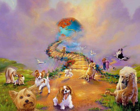 куда уходит душа собаки после смерти