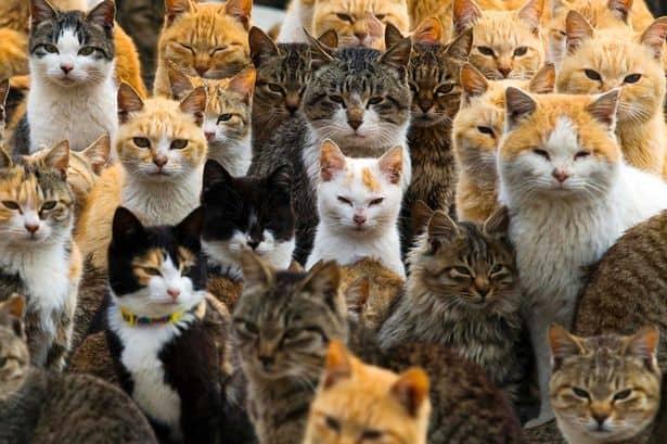 куда уходит душа кошки после смерти