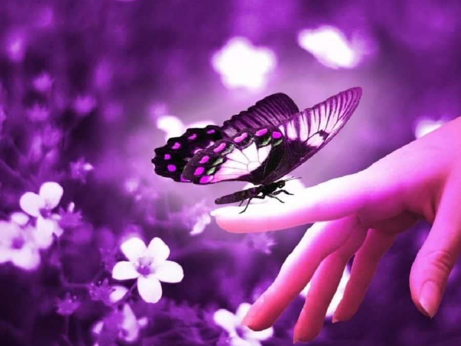 фиолетовая аура